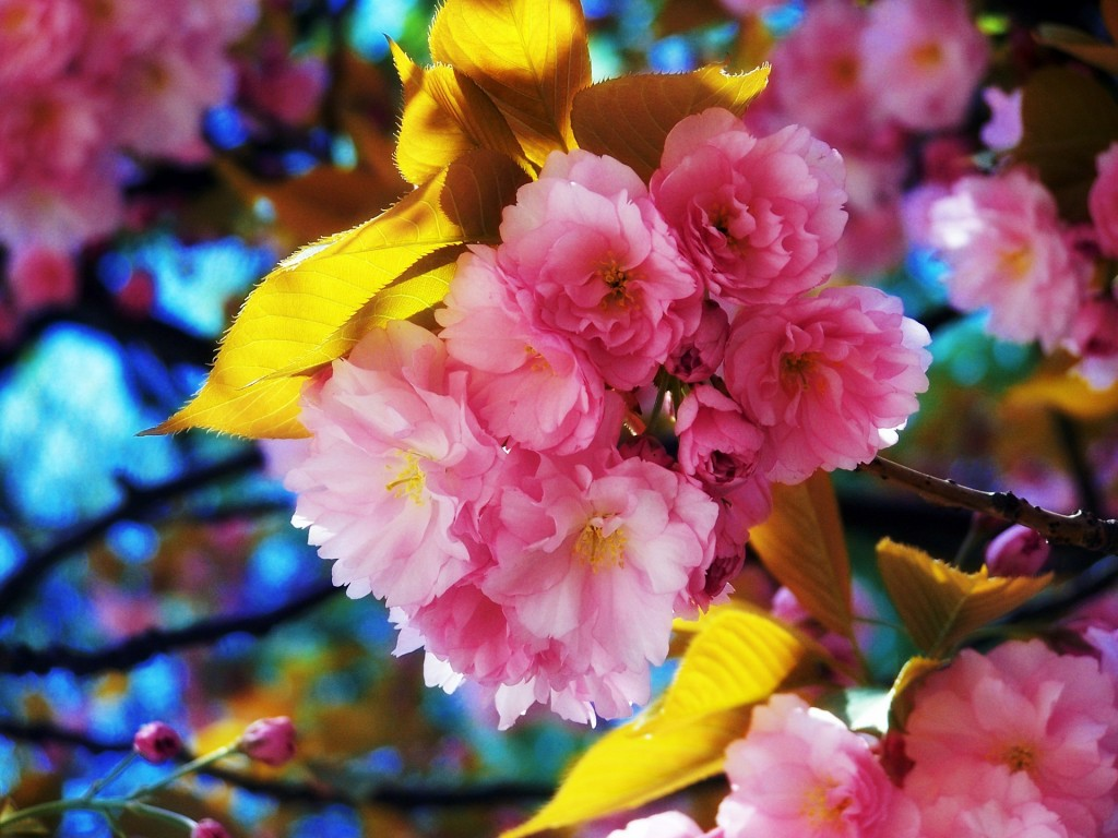 HD wallpapers for Windows 8-beautiful_flowers-normal
