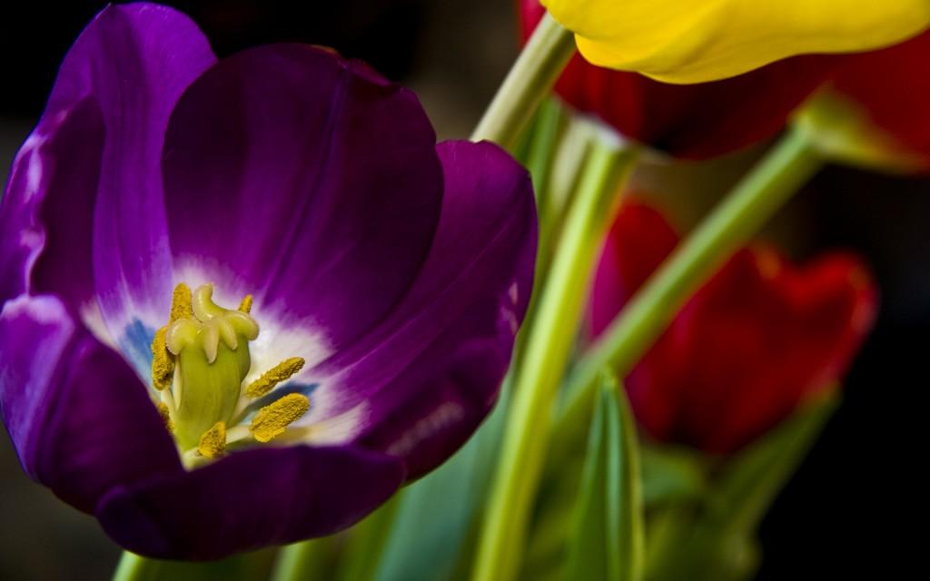 HD wallpapers for Windows 8-beautiful_purple_flower-wide