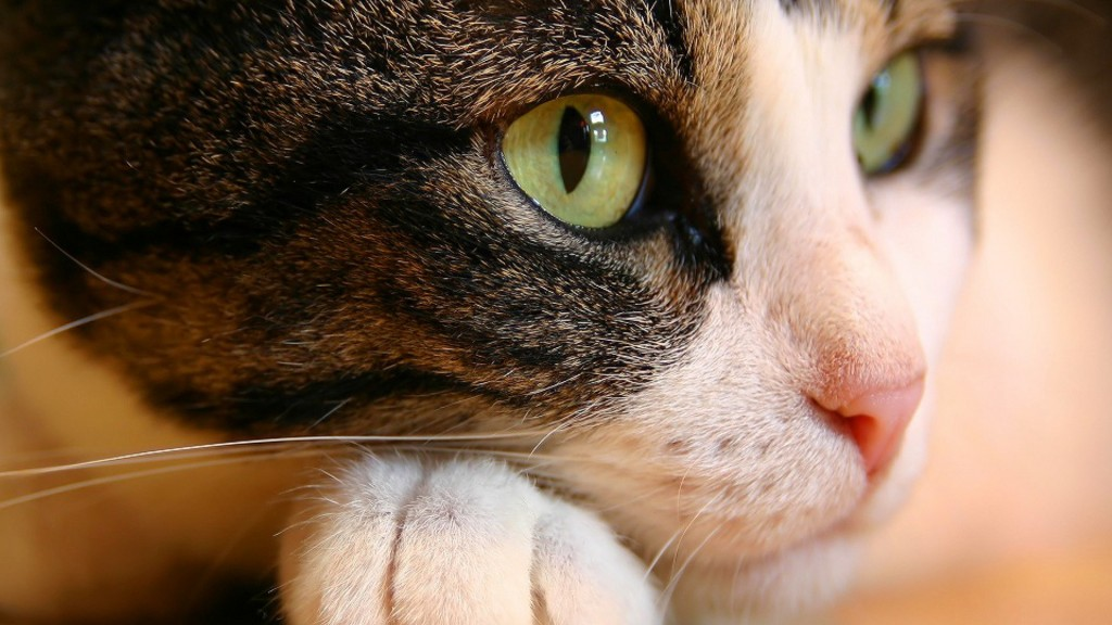 HD wallpapers for Windows 8-cat_eyes