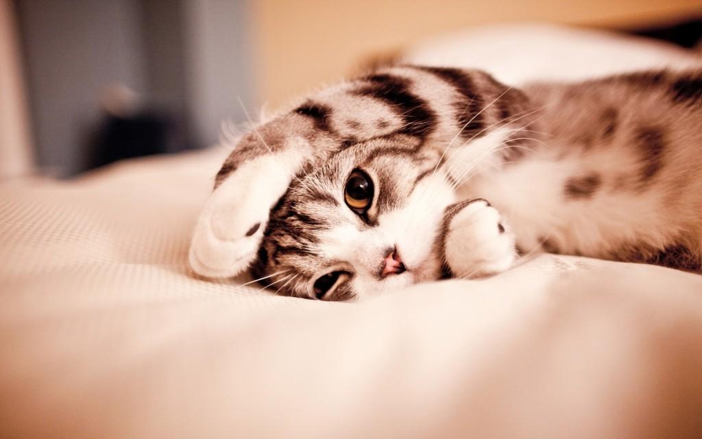 HD wallpapers for Windows 8-cute_sleeping_kitten