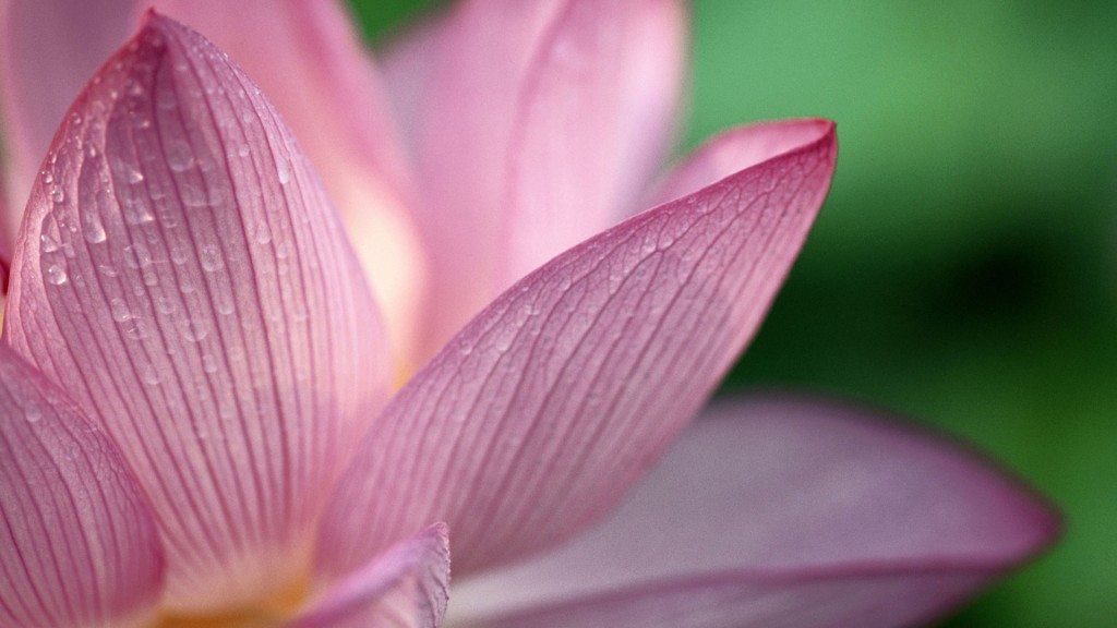 HD wallpapers for Windows 8-flower_pink