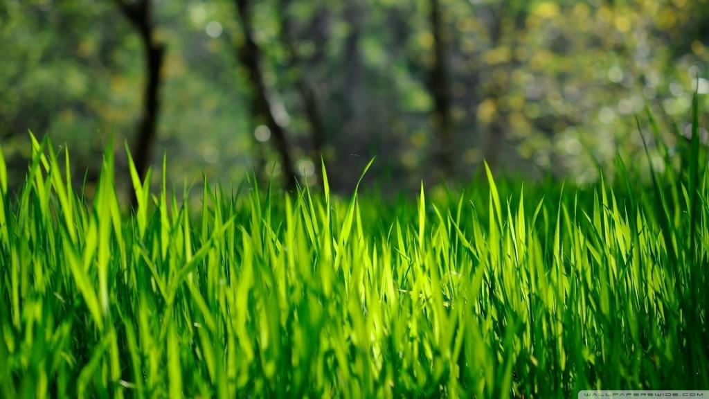 HD wallpapers for Windows 8-fresh_grass_4